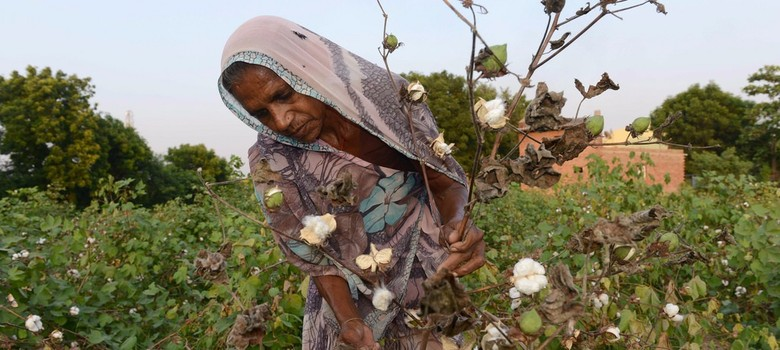 India 'not scared' if Monsanto leaves country over uniform cotton seed pricing