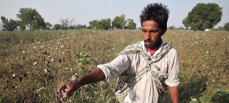 Three charts that show how Monsanto seeds changed cotton farming in India