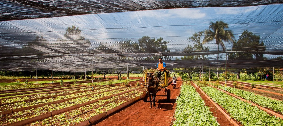 Cuba's sustainable agriculture at risk in US thaw