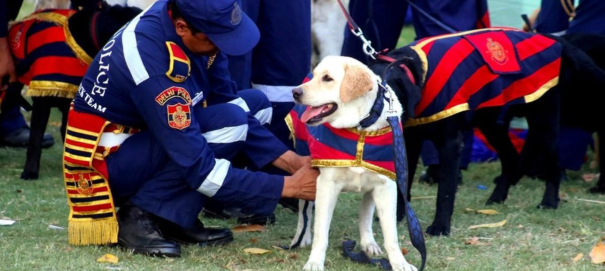 Photos: The Delhi Police dog squad now has 30 new crime-fighting Labrador  Retrievers