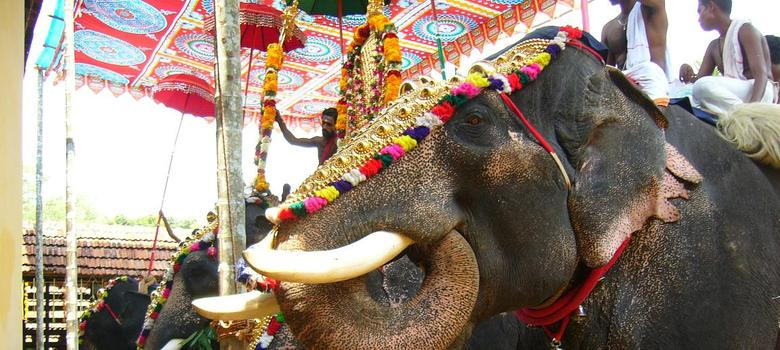 Low-decibel fireworks can be used at Thrissur Pooram festival, says Kerala High Court