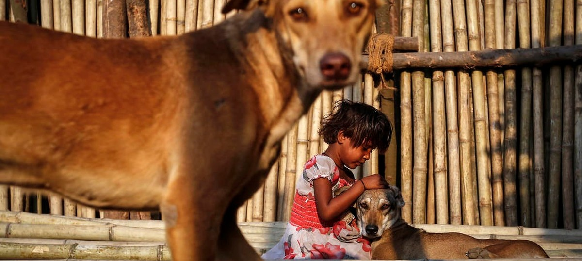 In India, animal lovers feeding strays are being met by incredible hate