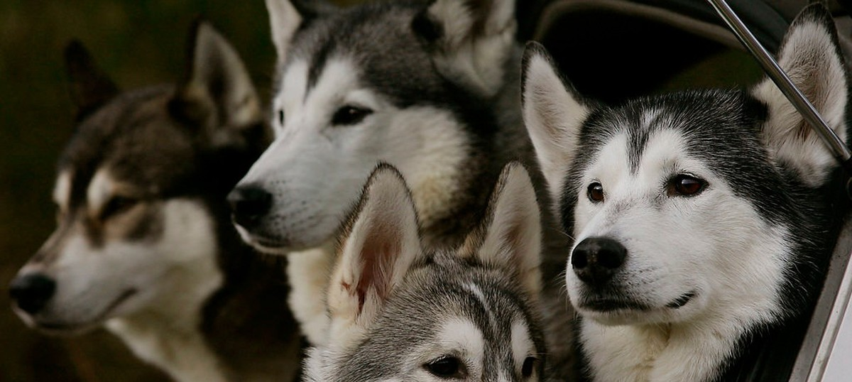 India's ban on importing dogs is welcome – but not enough