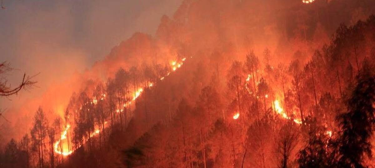 National Green Tribunal sends notice to Uttarakhand, Himachal Pradesh over forest fires