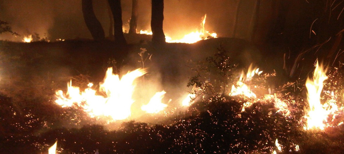 In photos: A week in the line of Uttarakhand's forest fires
