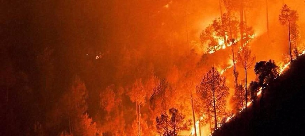 Uttarakhand fires: The state's wells have run dry – of wisdom, commitment and love for the forest