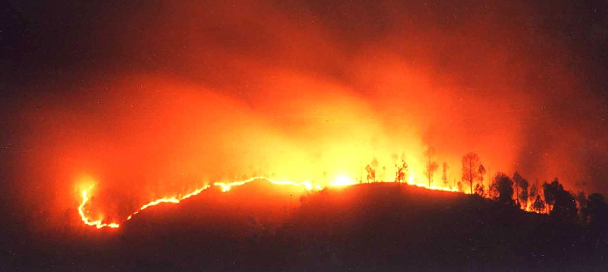 So what's wrong in asking who set the forests on fire in Uttarakhand?