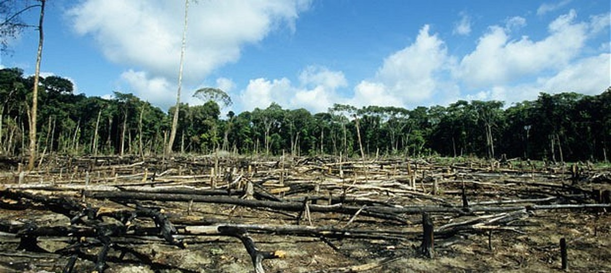 Just 6% of funds to repair destroyed forests have been used – and that's a good thing (and bad)