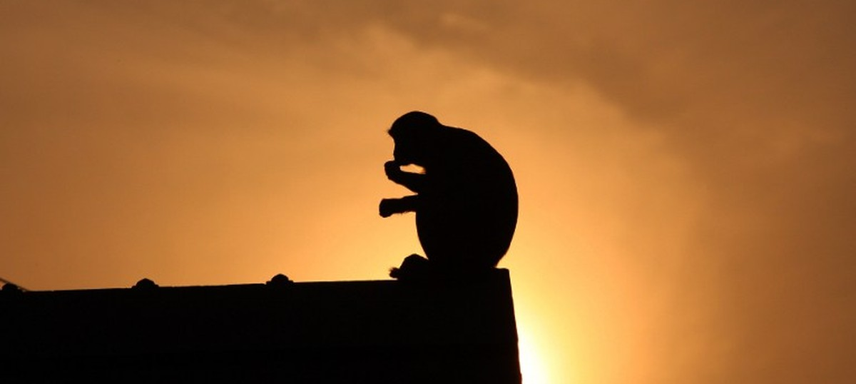 Monkey causes nationwide power outage in Kenya