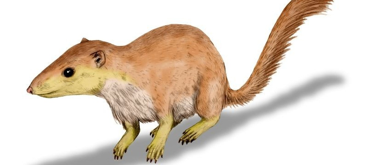 Fossil teeth reveal the secret rise of mammals – millions of years before dinosaurs became extinct