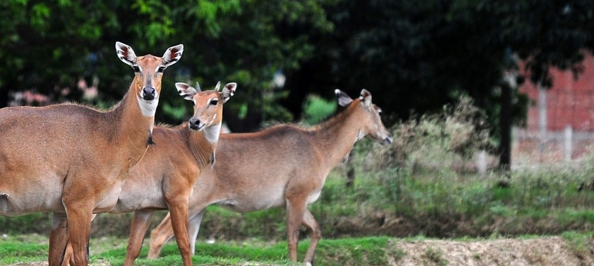 Supreme Court refuses to stay culling of nilgai, other animals across northern states