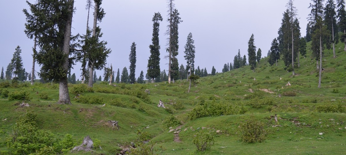 Timber smugglers turn conservationists to take Kashmiri meadow back from the Indian Army