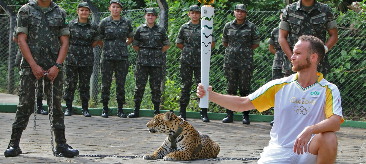 Rio Games organising committee apologises for killing jaguar after using it at Olympic torch event