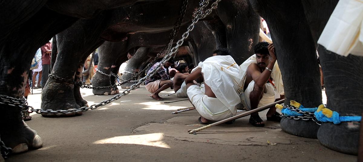 Documentary 'Gods in Shackles' on temple elephants is an eye-opener