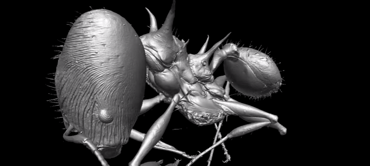 Meet Viserion and Drogon: The new ant species named after the 'Game of Thrones' dragons