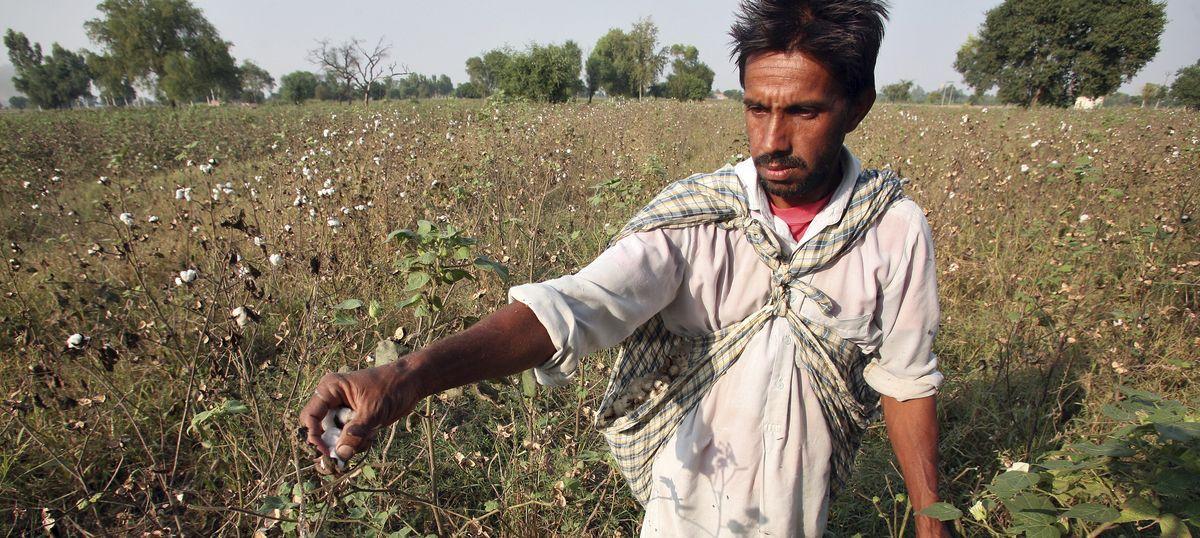 Counterview: Fact-checking Vandana Shiva's latest criticism of Monsanto and Bt cotton