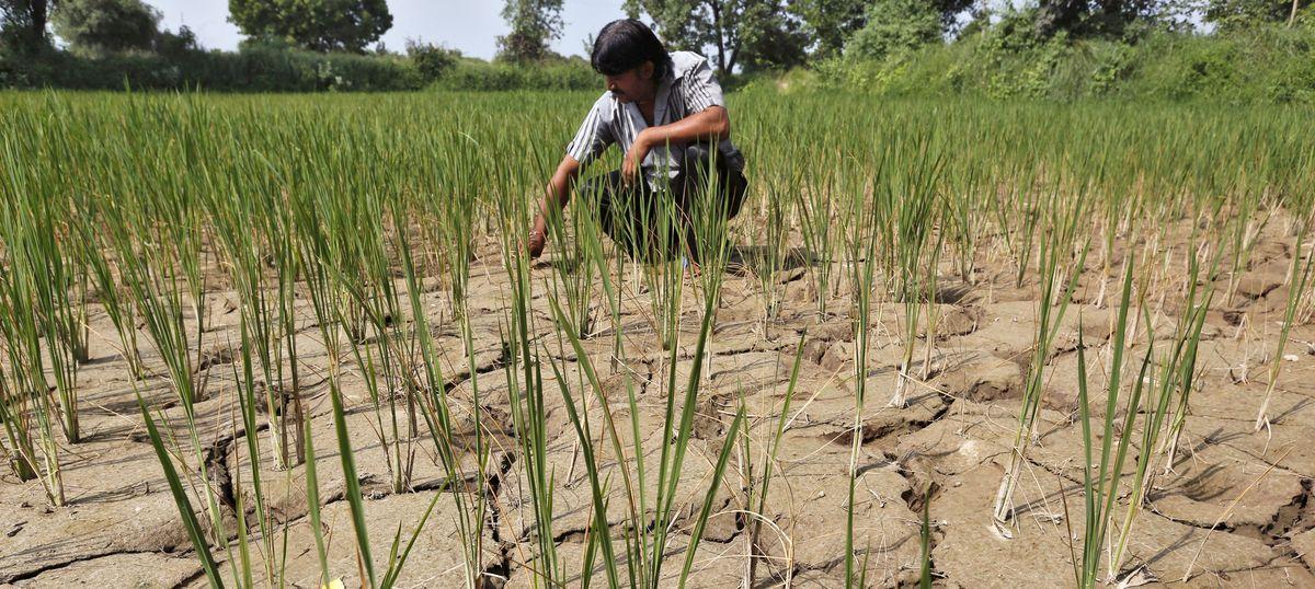 Amid acute shortage, Karnataka cannot release water to Tamil Nadu for irrigation, says Siddaramaiah