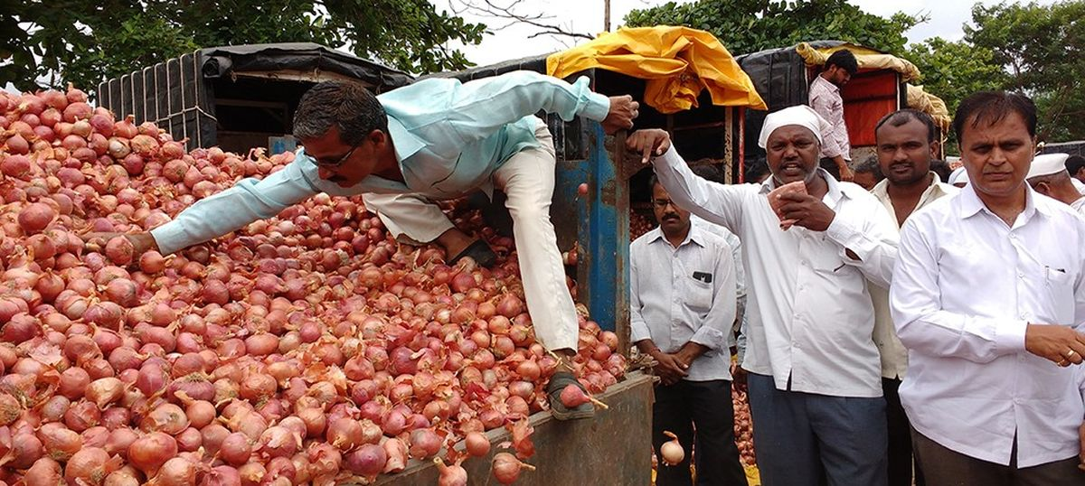 Onion prices have crashed in Maharashtra and farmers are despairing