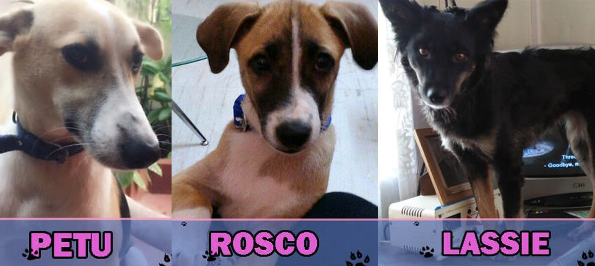 Which of these pups should be crowned the 'Cutest Indian Dog Alive'? Hint: All