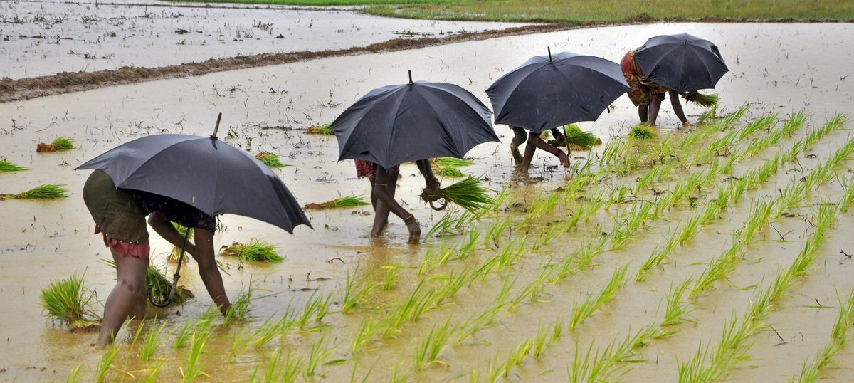Good monsoon may bring record yields this year, but not all of India has gained equally