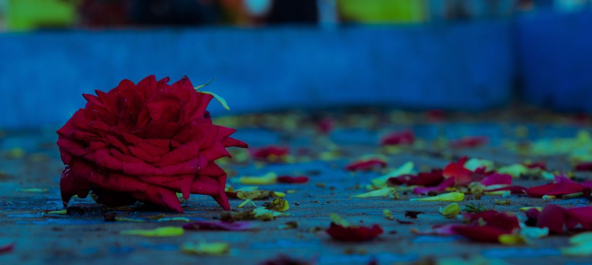 In one Chennai market, demonetisation has forced tonnes of flowers to be dumped