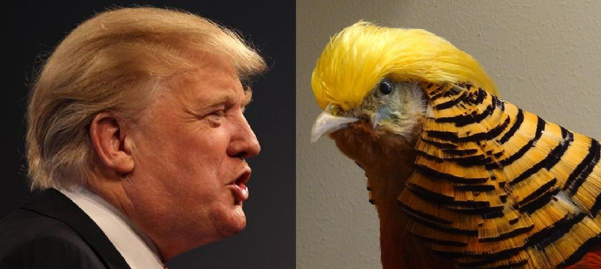 A bird with Donald Trump's hairdo has been spotted in a Chinese safari park