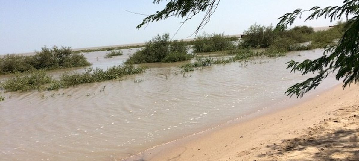 Villages are trying to replant mangroves in Kacchh to save the coast – and the world