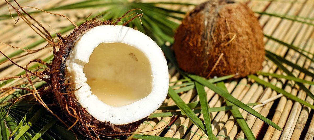 A world without coconut water? The world's trendiest nut is under threat of species collapse