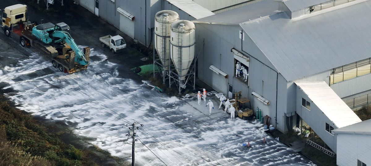Japan begins culling of 2 lakh farm birds after reports of avian flu