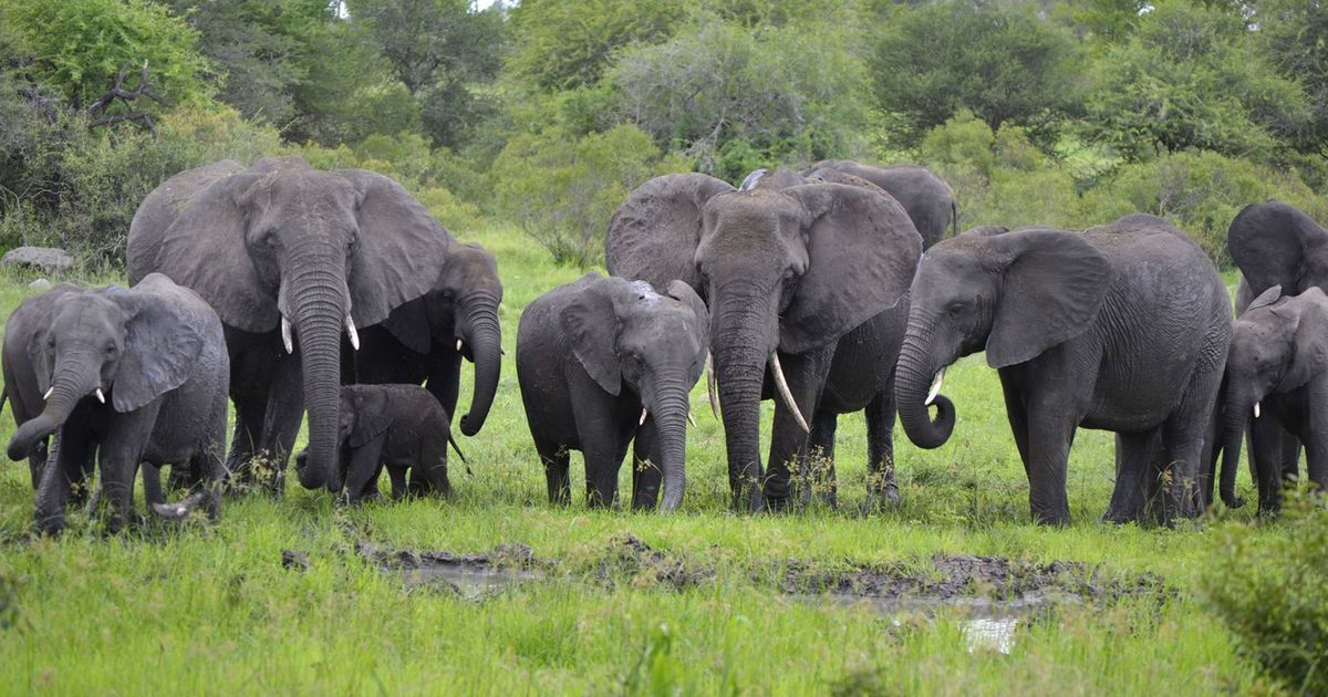 Zimbabwe's plan to sell elephants to China to settle debts isn't illegal, but it's certainly harmful