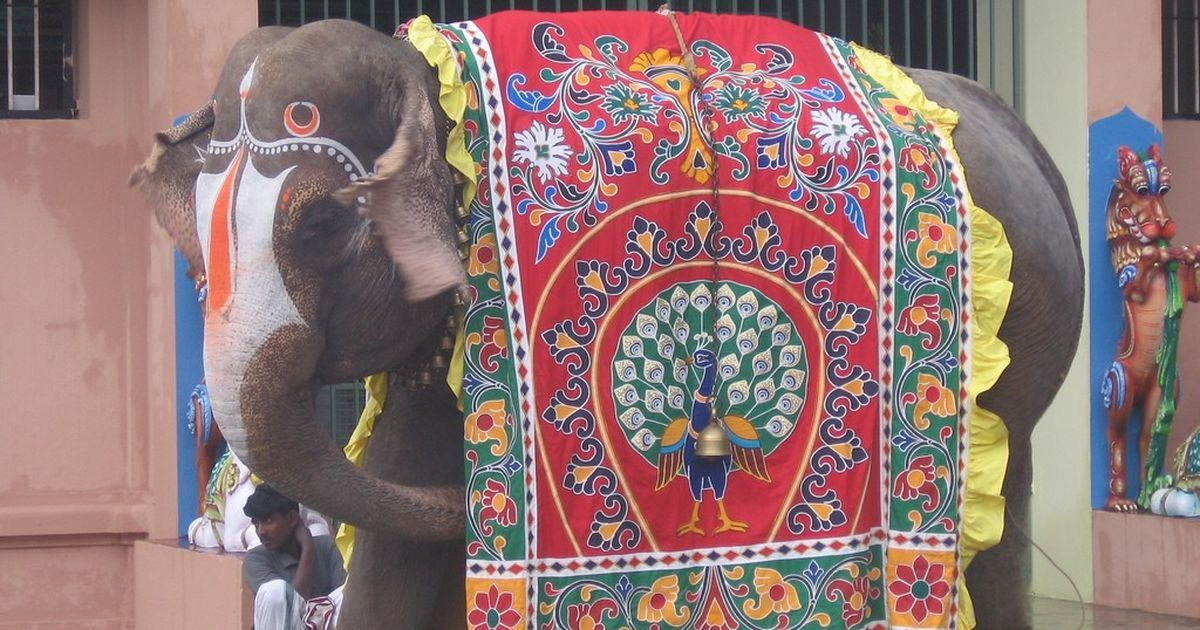 AIADMK presses pause on rejuvenation camp for temple elephants, Jayalalithaa's pet project