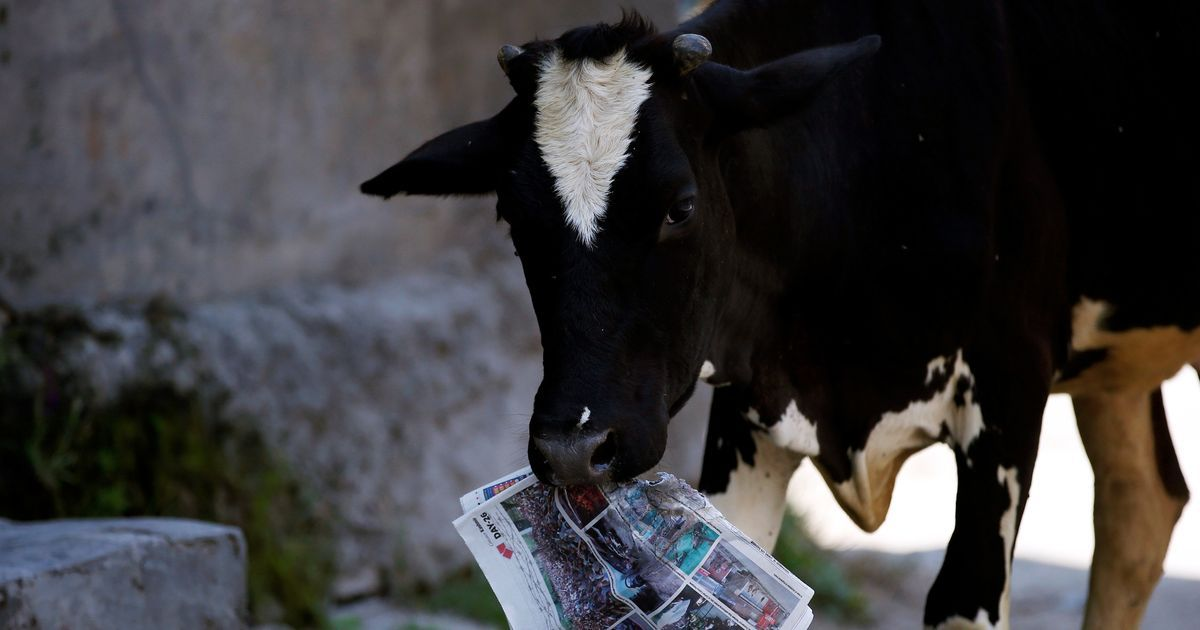 The cow is the only animal that inhales and exhales oxygen, says Rajasthan education minister