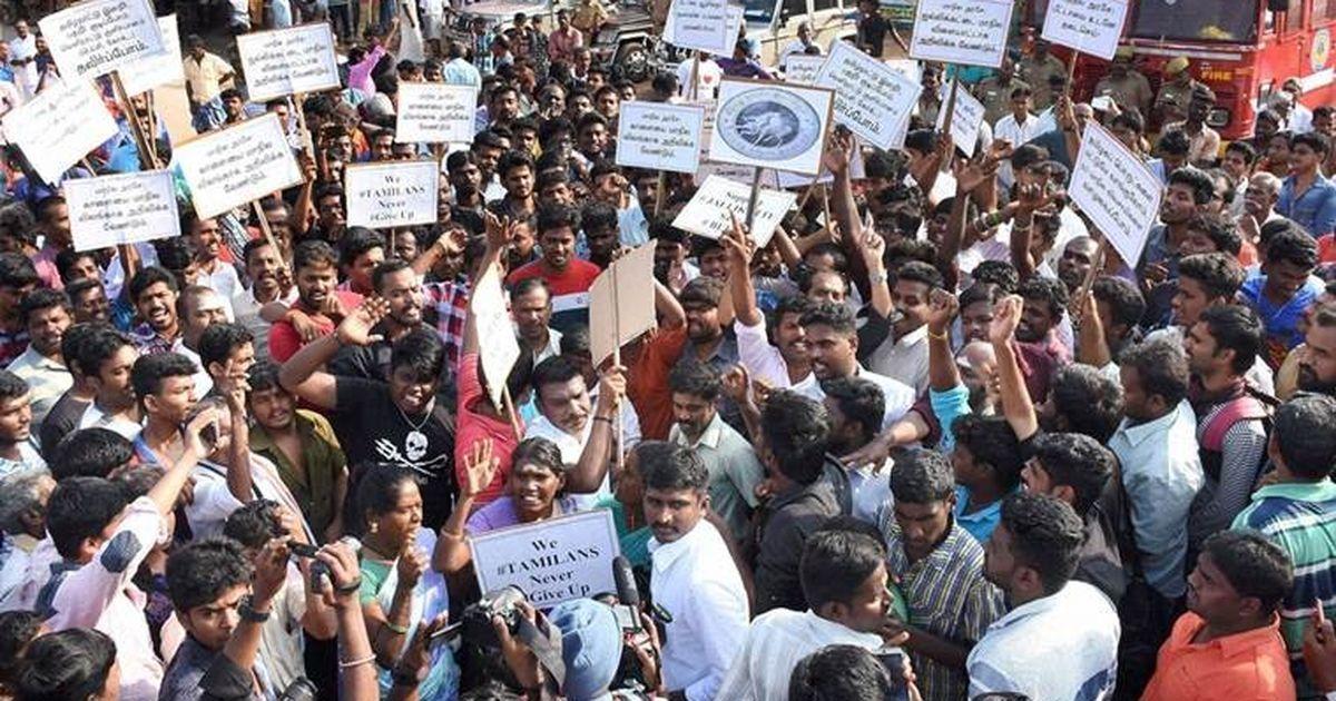 Tamil Nadu: Thousands protest against jallikattu ban, O Panneerselvam to meet Narendra Modi tomorrow