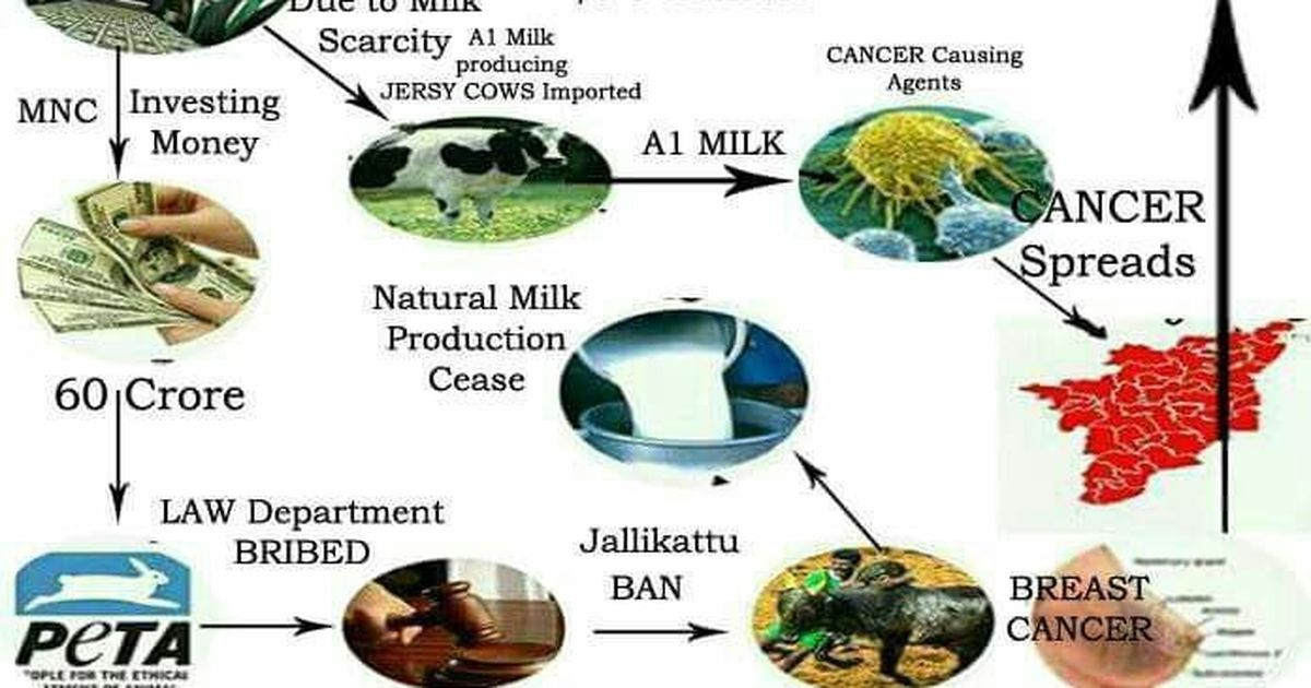 Fact-check: Little evidence that 'foreign' A1 alternative to jallikattu cattle milk causes cancer