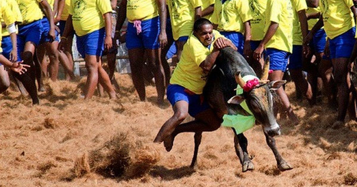 Supreme Court will hear all petitions challenging Tamil Nadu's jallikattu law on January 30