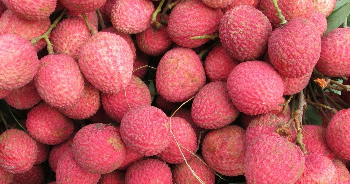'Litchi deaths' in Muzaffarpur are not mysterious and finding their cause is not a new discovery