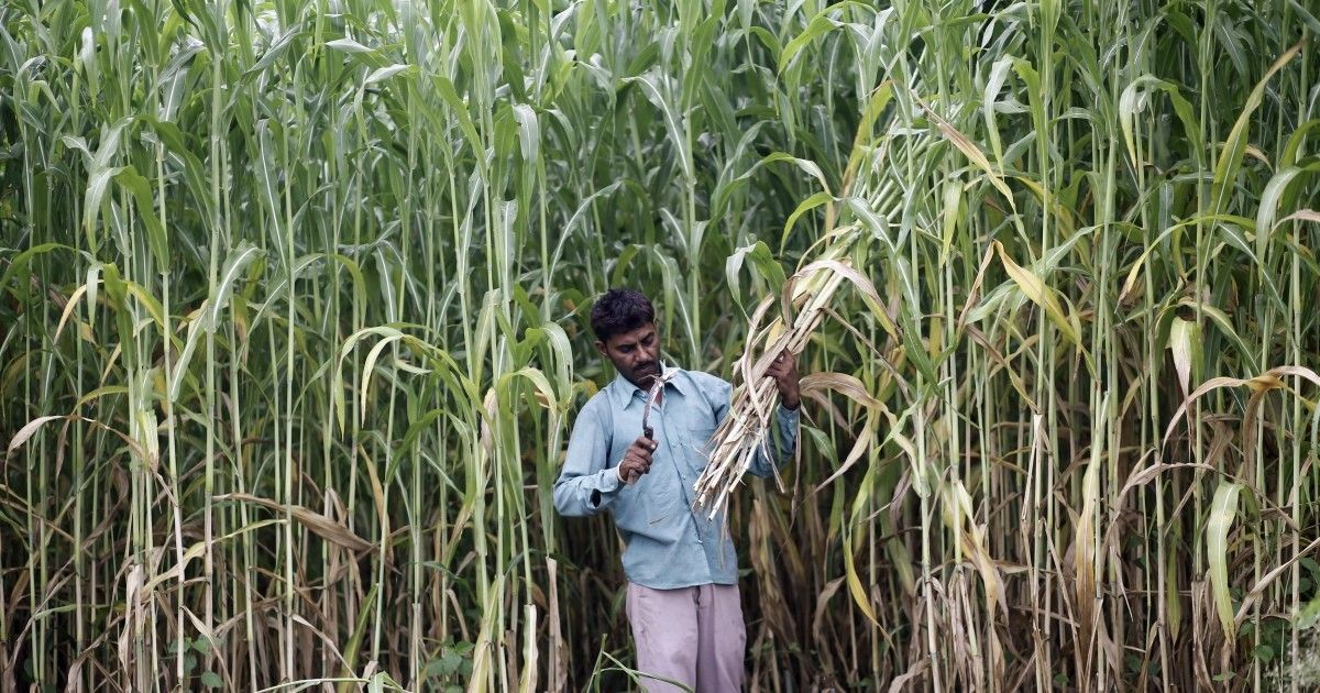 The crisis in sugarcane is shaping politics in western UP's Jat belt