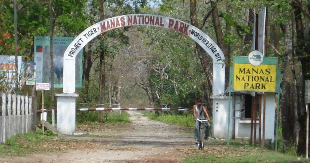 The fortunes of the rhinos in this national park are intertwined with Assam's ethnic politics