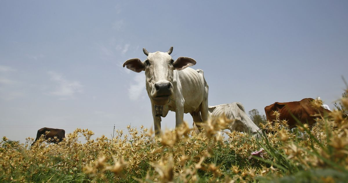 BJP MPs discuss benefits of the cow at length in Rajya Sabha