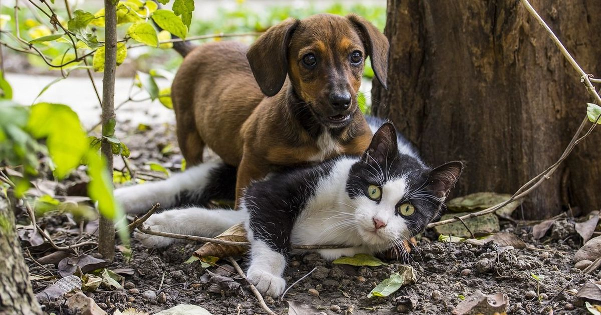Not just China, it's legal to sell dog and cat meat in most American states