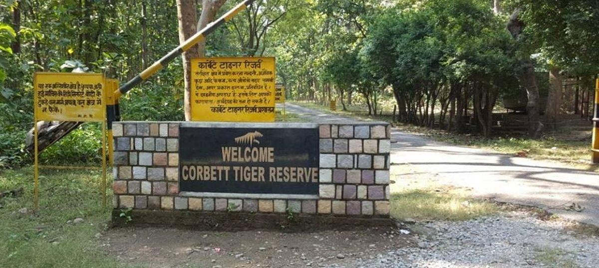 Tiger dies of starvation at Corbett reserve
