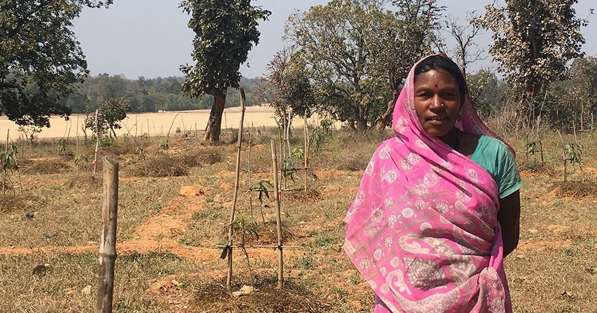 A mango plantation in Jharkhand shows how MGNREGA can really empower rural families