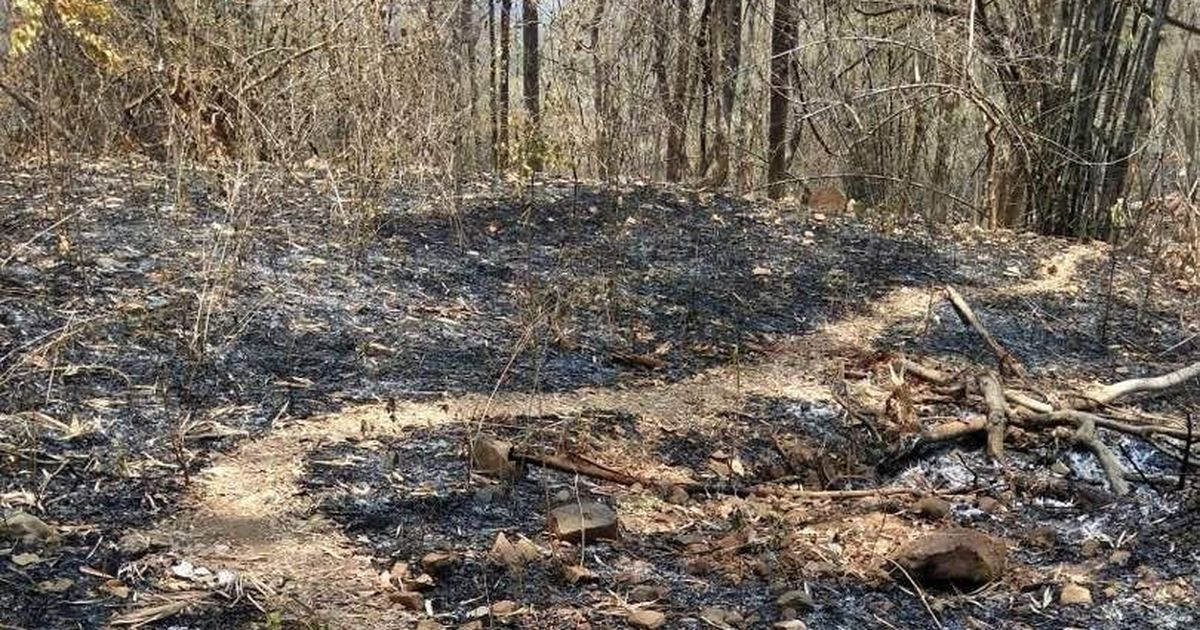Sukma ambush: Neighbouring states seal borders with Chhattisgarh to 'flush out' Maoists