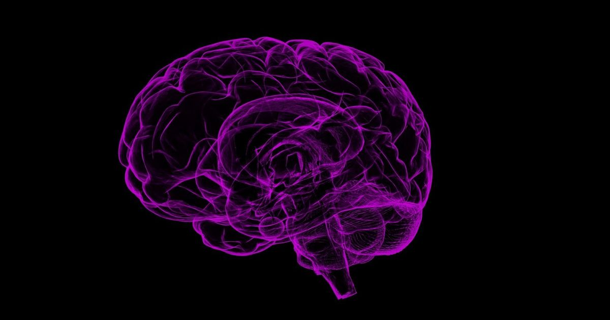 Lab notes:  The gene mutation that prevents the two halves of the brain from talking to each other