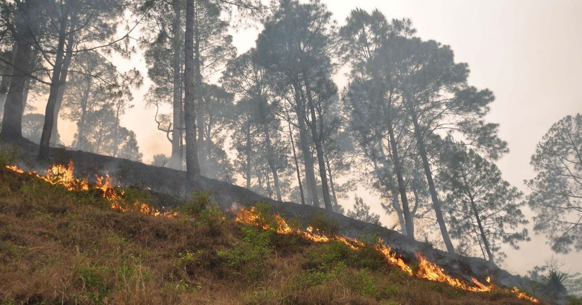 Damage control: Why Uttarakhand saw few wildfires this year