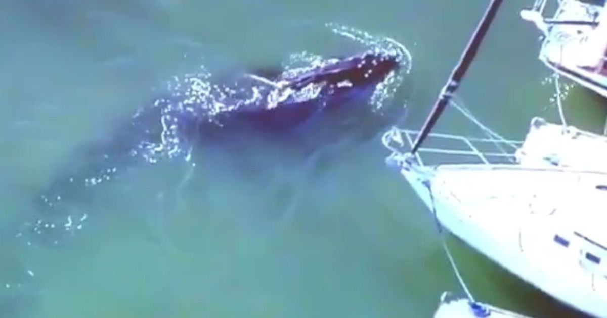 United States: Major rescue operation launched to free trapped humpback whale in California harbour