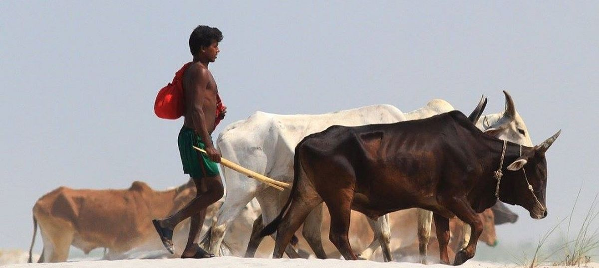 The big news: Court stays ban on sale of cattle for slaughter at markets, and 9 other top stories