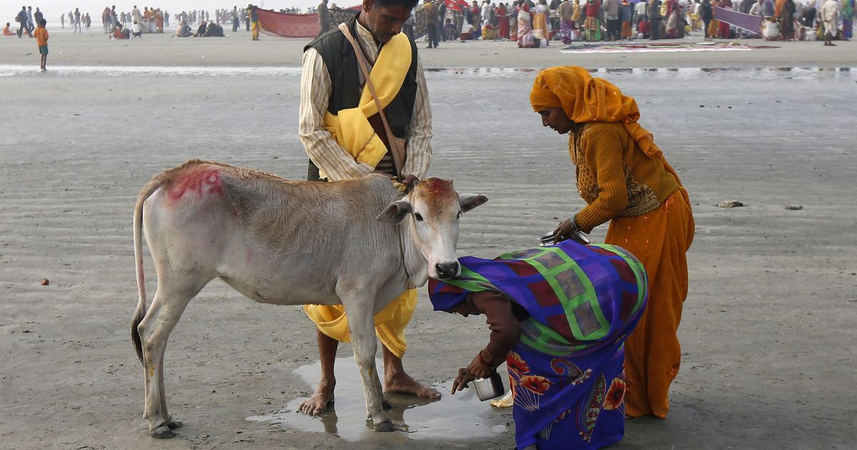 Cow is a 'substitute to Mother and God', says Hyderabad HC judge