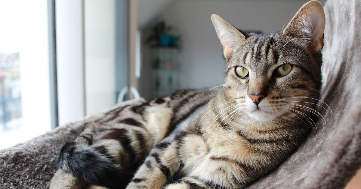 Ancient DNA reveals how cats conquered the world