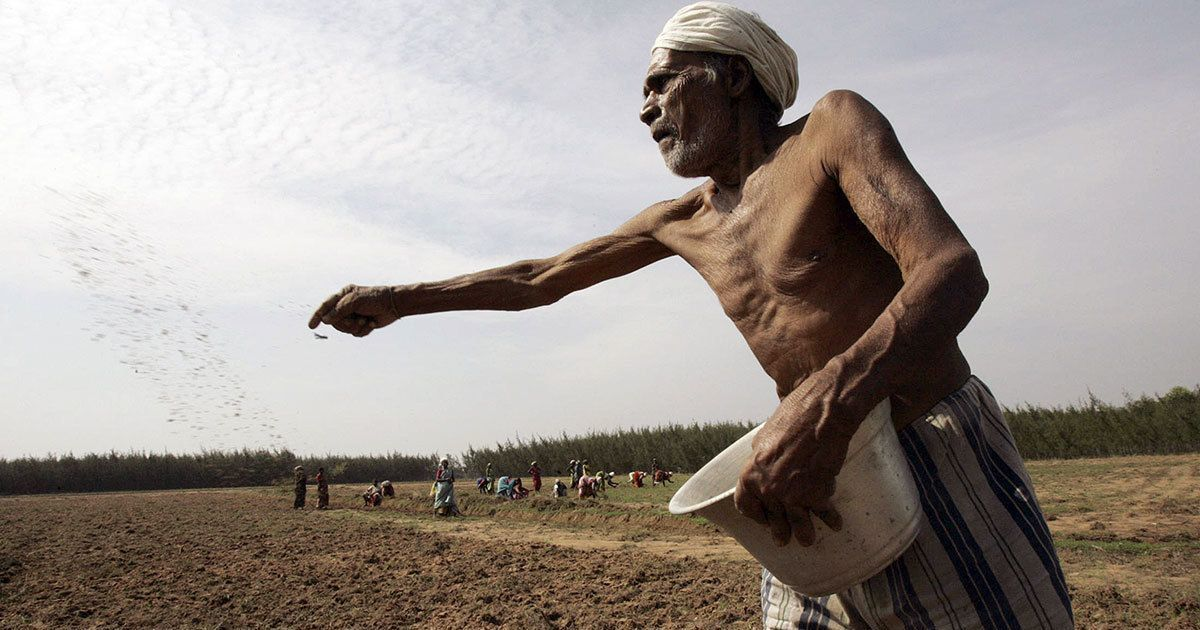In the Cauvery delta region of Tamil Nadu, farmers no longer consider the summer crop to be viable